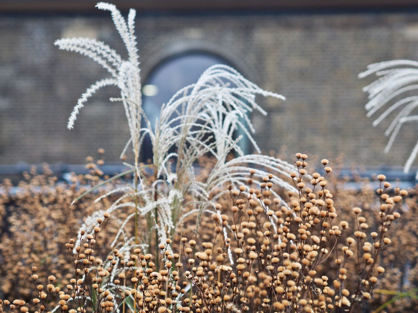 Coal Drops Yard, High line, grasses, Mary Middleton for Hello Peagreen